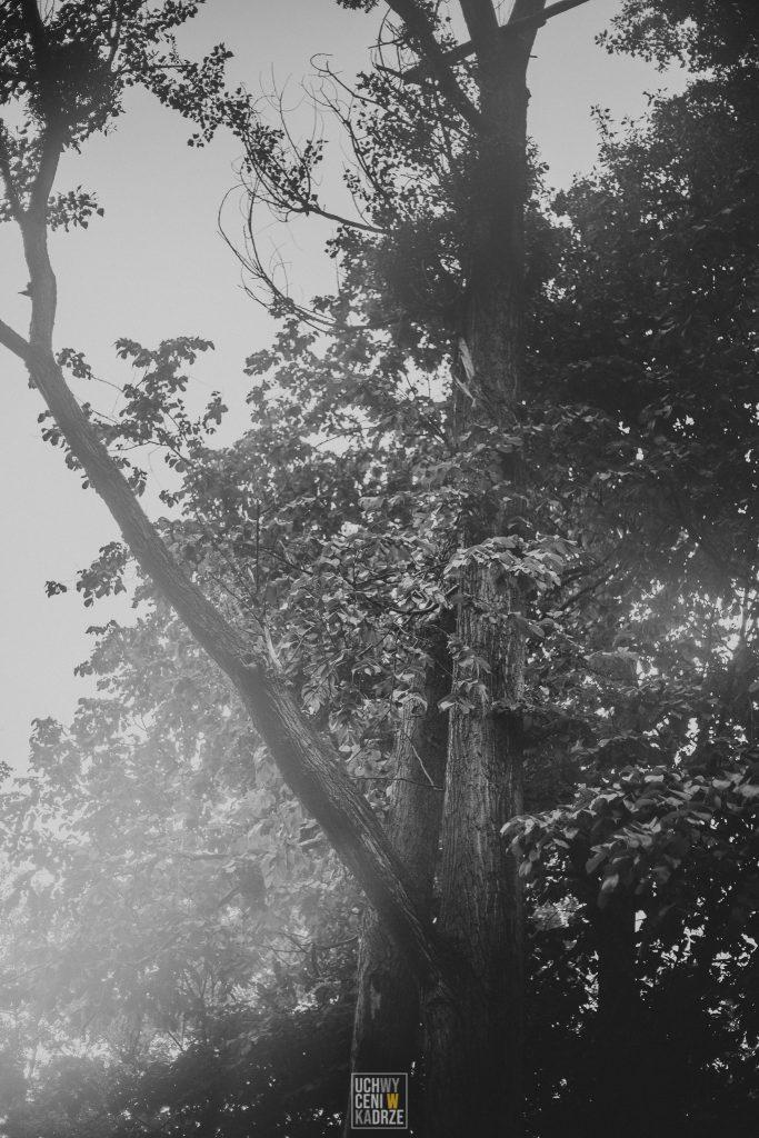 Aleksandra Sesja Zamosc 9 683x1024 - Wyjazdowa sesja na terenie Zamojszczyzny | Fotograf Zamość